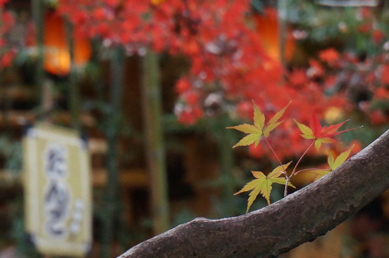 紅葉‗深大寺