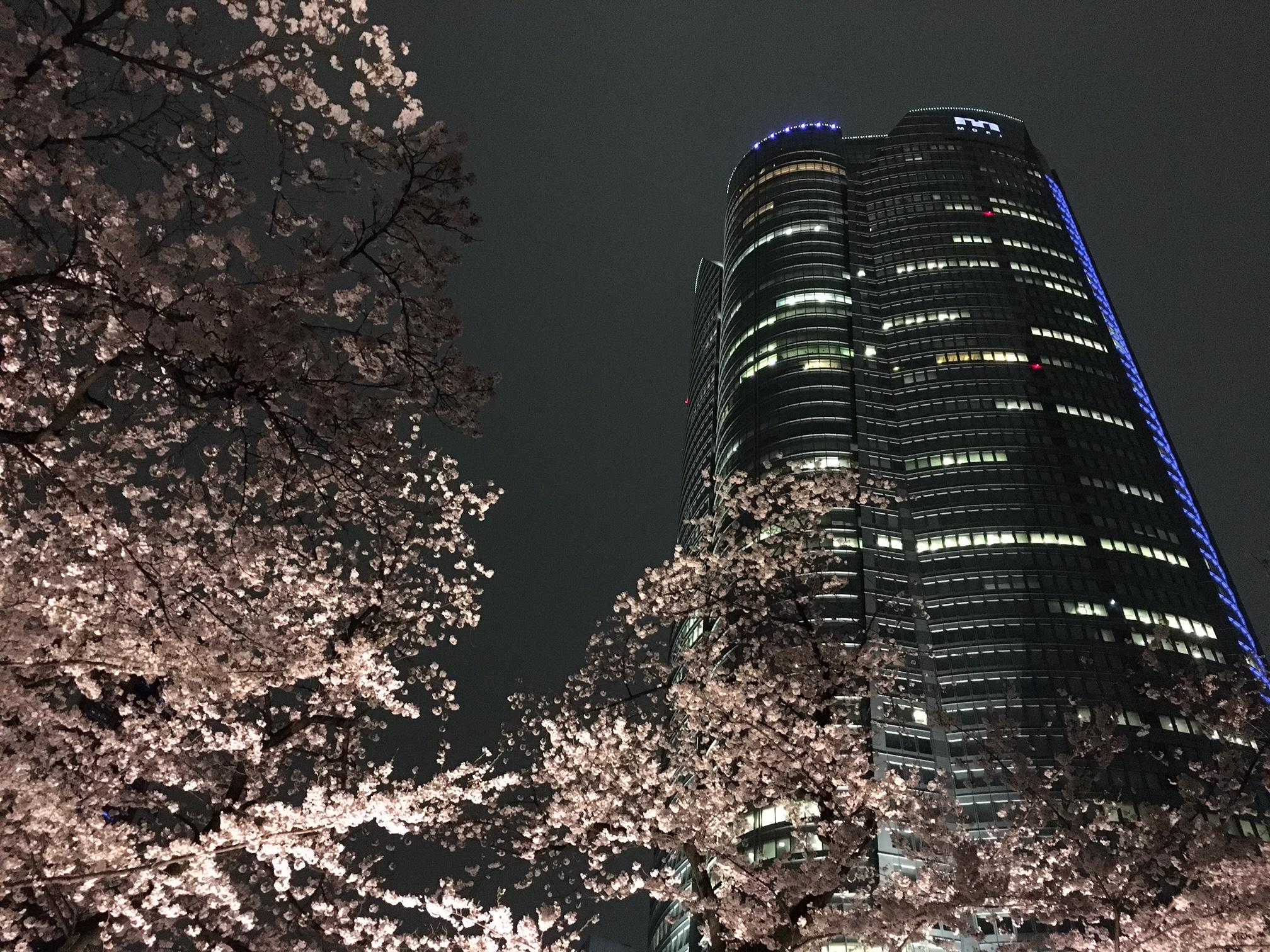 桜‗六本木ヒルズ