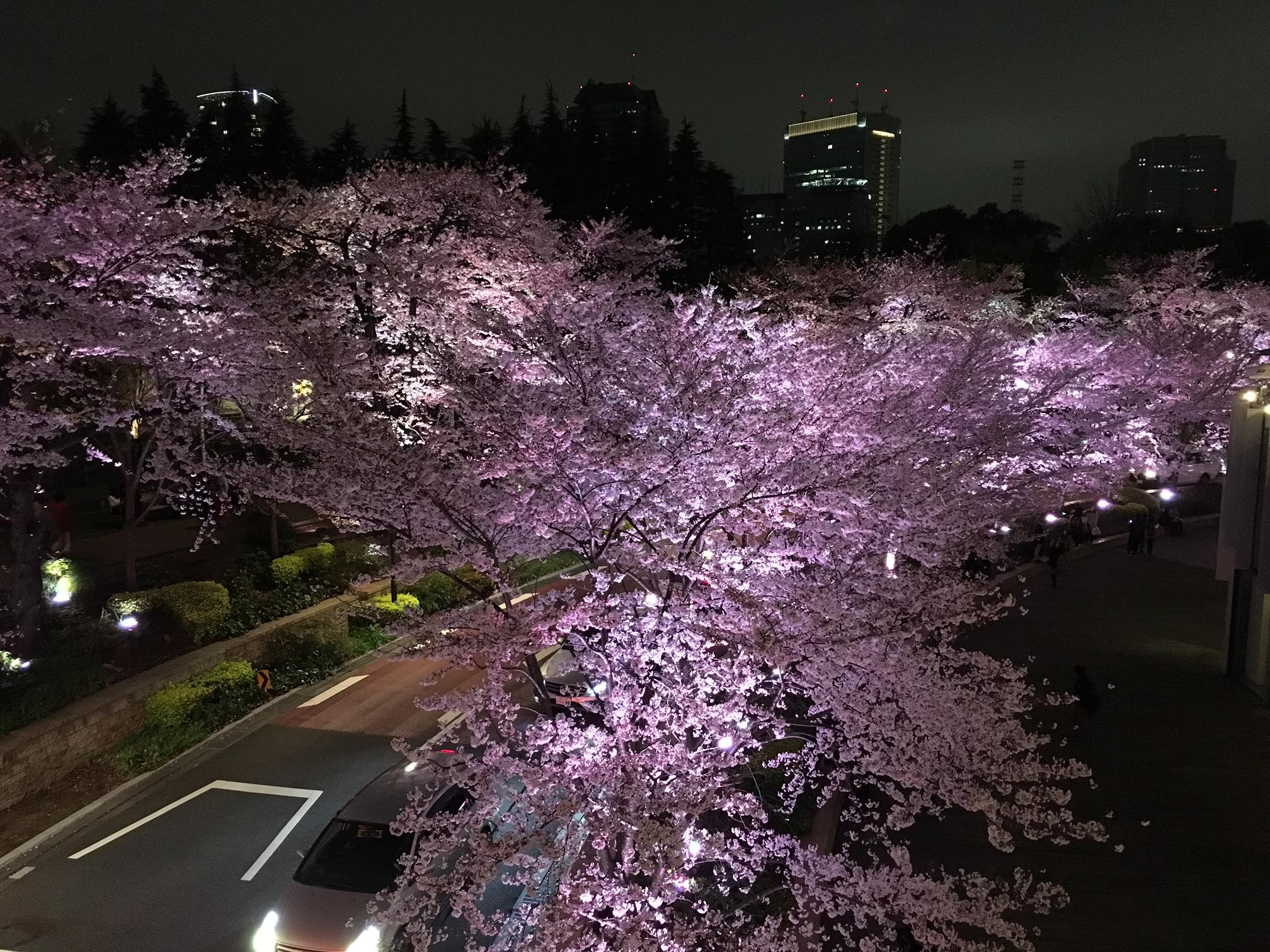 桜‗東京ミッドタウン
