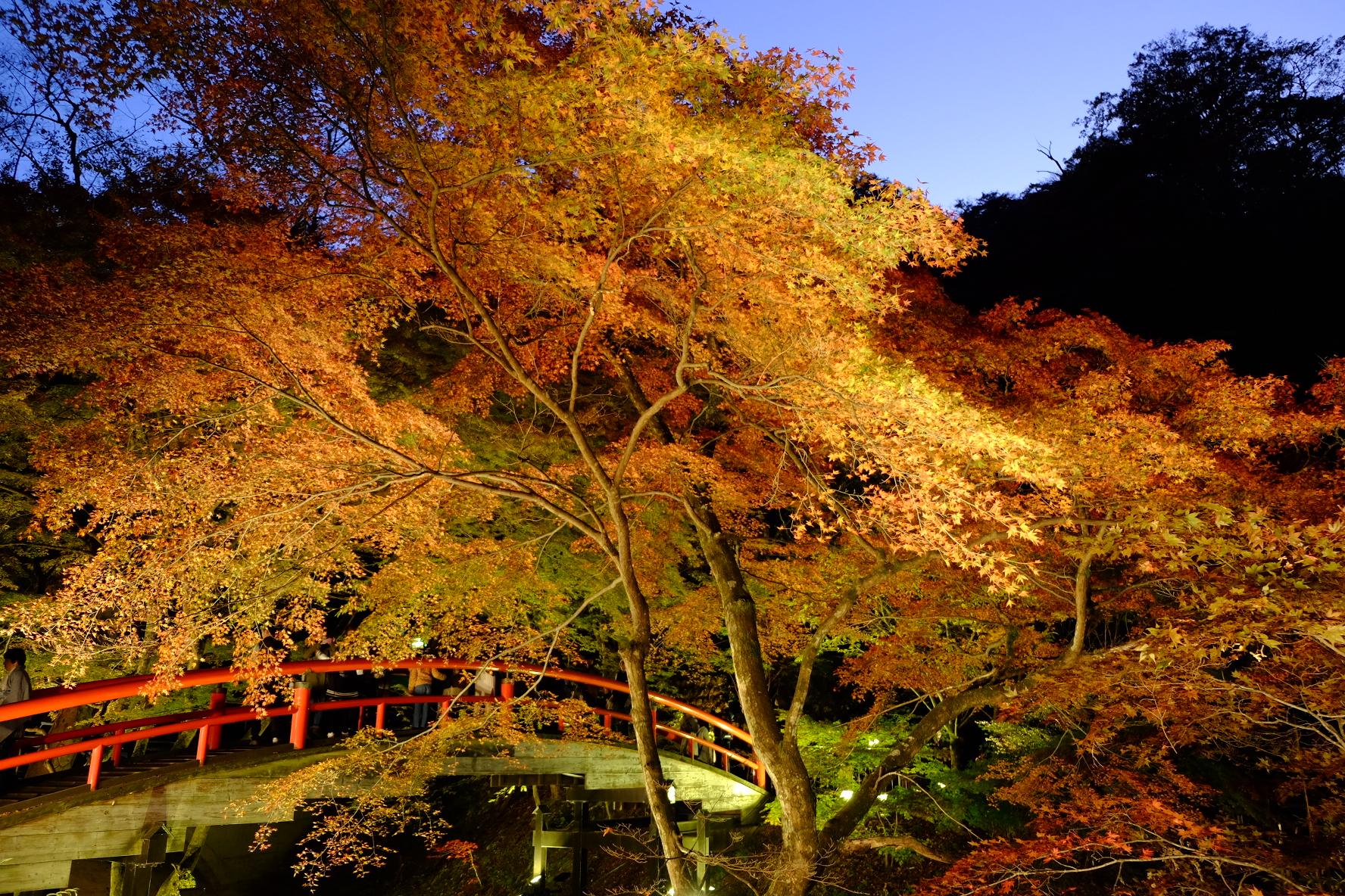 伊香保温泉「河童橋」紅葉ライトアップ