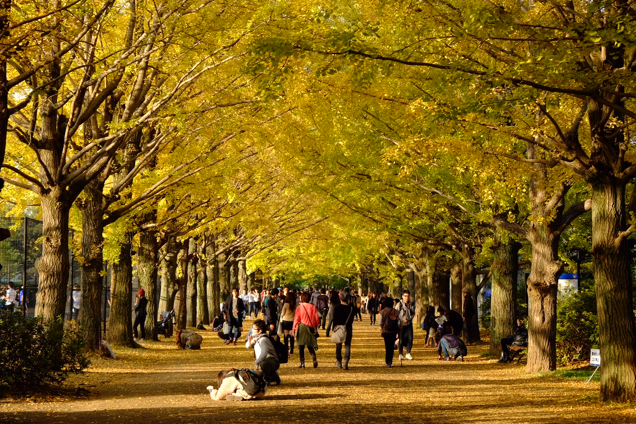国営昭和記念公園‐かたらいのイチョウ並木