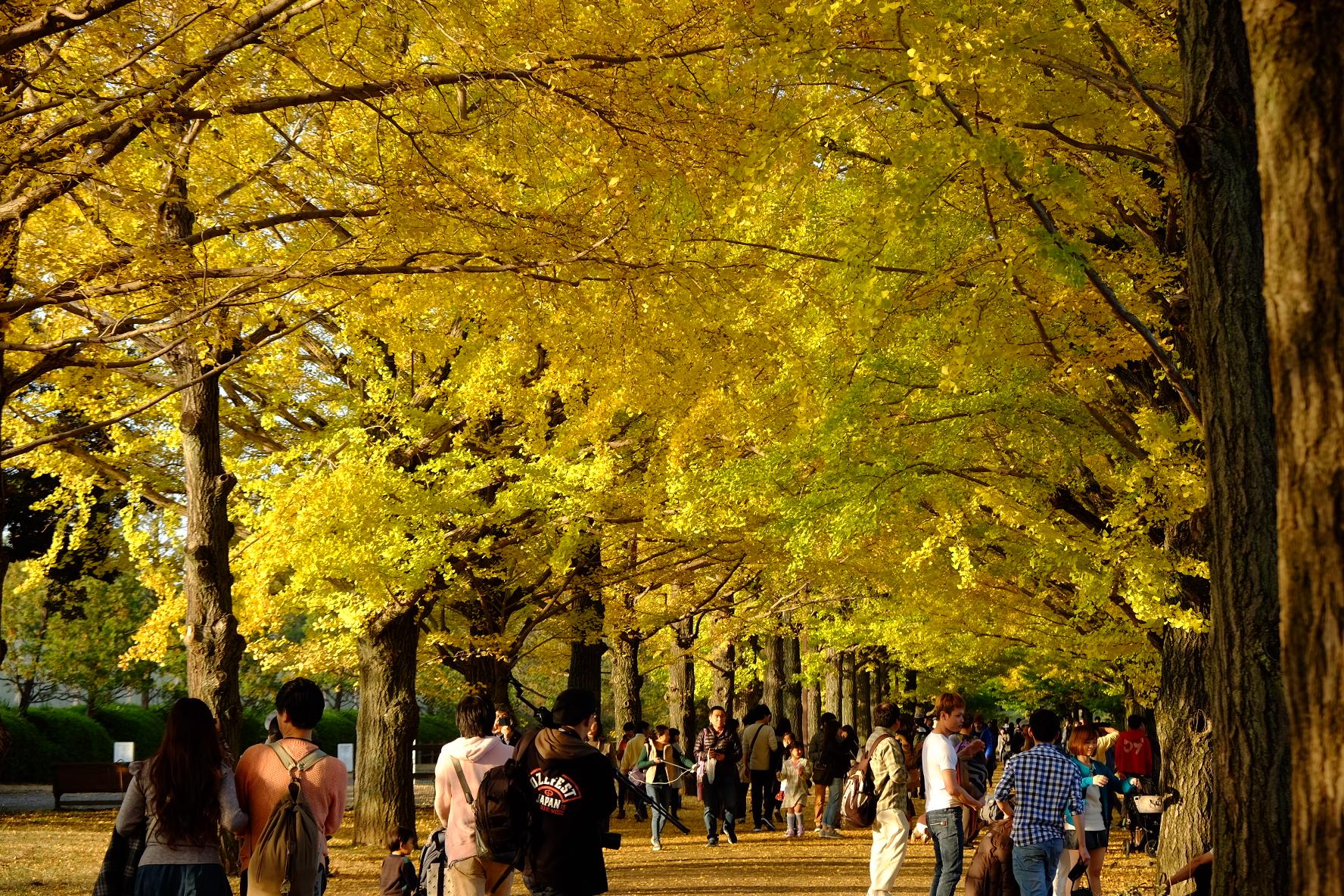 国営昭和記念公園‐紅葉