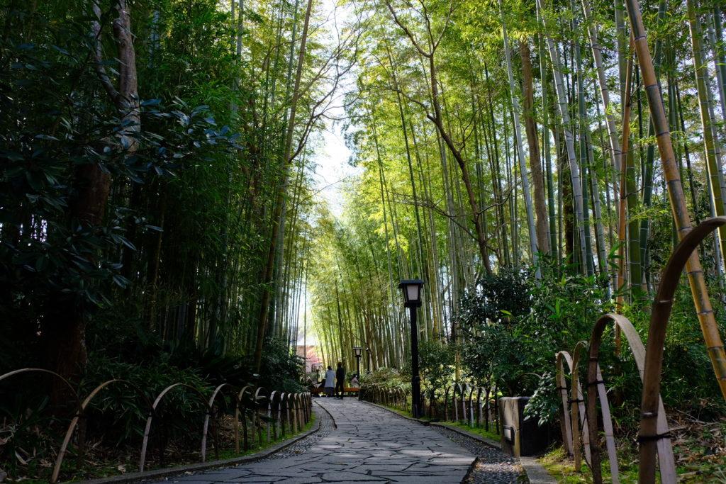 趣ある散策路「竹林の小径」